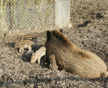 Krimi-Trail Kids Langenthal: Sabotage im Tierpark